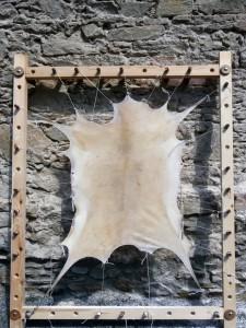 Calf skin stretched on a frame