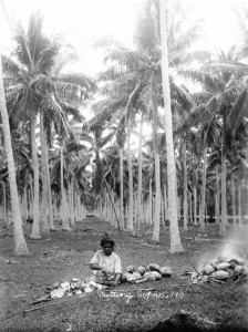 Y3091C_8 Cutting copra, Fiji, 1905