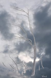 Geneviève Guetemme, 'Wind'